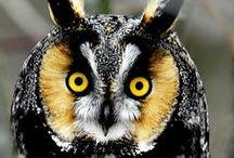Madarak / Birds / madarak sokszínűsége