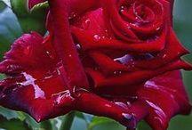 Piros / Red / Minden ami piros