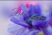 Lila / Purple / .