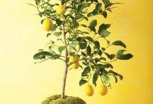 in/outdoor garden / garden, green, plants, flowers, nature, indoor, vegetables, kitchen