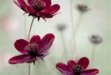 Blommor ute