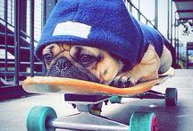 Emily skateboards / Awesome skateboarding things