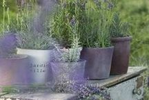 Ideas for Container Gardening / Cram more into your garden with collections of pots. Group together different sizes and shapes for added impact. Perfect for tiny gardens, patio and balconies too.