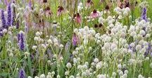 Ideas for Prairie/Meadow Gardens / For a prairie/meadow garden planting plan, tailored to your garden's soil and climate, visit https://www.plantingplanner.com
