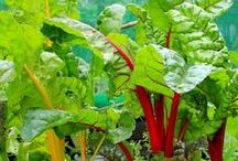 Growing Vegetables in Pots / If you haven't room for a vegetable patch or time for an allotment, try growing vegetables, salad and fruits in containers. Cram them in around your garden or squeeze onto patios, balconies, windowsills and roof gardens.