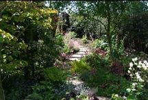 Ideas for Woodland Gardens / Choosing plants for shady, woodland gardens. For a woodland garden planting plan, tailored to your garden's soil and climate, visit https://www.plantingplanner.com