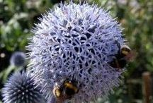 Ideas for Wildlife Gardens / Create a wildlife habitat in your own garden. For a wildlife-friendly planting plan, tailored to your garden's soil and climate, visit https://www.plantingplanner.com