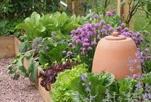 Kitchen Gardens and Potagers / Ideas for creating a kitchen garden or potager - an edible, ornamental garden with tapestries of colours and shapes. Intermingle herbs, flowers, vegetables and fruits to make your garden both beautiful and practical.