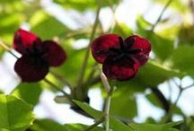 Climbing plants / Scramblers, twiners or self-clinging - there's an ideal climber for every spot. To find the perfect plants for your garden, visit https://www.plantingplanner.com