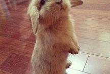 //BunnyTime!