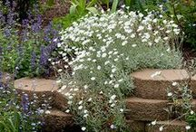 Ideas for Rock Gardens / Choose low maintenance fillers and spillers for your rock garden