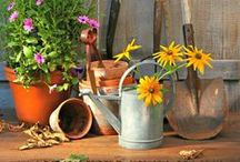 Gardening on a Budget / Ideas for creating beautiful gardens without spending a fortune. Don't waste money at the garden centre on plants which won't thrive in your garden -try https://www.plantingplanner.com for planting plans which only use plants which are suitable for your garden's conditions.