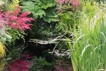 Ideas for Bog Gardens / Inspiration for soggy, boggy ground. If you are wondering what to plant in your damp soil, try https://www.plantingplanner.com for tailor-made planting plans to suit the conditions in your own garden.