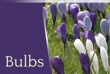 Bulbs / Planting bulbs is one of the easiest ways to start gardening. Check out these bulbs for every season of the year. For tailor-made planting plans with all year round interest, visit https://www.plantingplanner.com