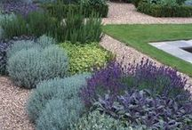 Drought tolerant plants / Ideas for plants that will cope with dry soil.  If you are wondering what to plant in your dry garden, try https://www.plantingplanner.com for tailor-made planting plans to suit the conditions in your own garden.