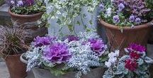Winter Pots / Inspirational recipes for colourful winter containers. https://www.plantingplanner.com