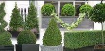 Ideas for Formal Gardens / Inspiration for creating an elegant, formal style of garden. https://www.plantingplanner.com