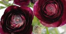 Shades of Burgundy / The Burgundy Collection - deep wine-reds for a touch of glamour and sophistication.
