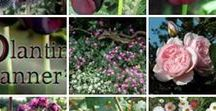 Beginner Gardeners / A collection of useful tips and pins for new gardeners. If you've ever thought designer gardens are only for the experienced horticulturist, it's time to think again. The secret is getting the planting right – for a bespoke planting plan, tailored to your garden's soil and climate, take a look at https://www.plantingplanner.com