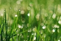 Grass / Trawa