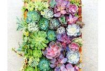 flower arrangments / by Paulina Jakubiec