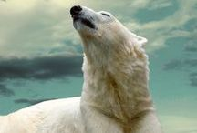 my spirit animal / the majestic polar bear in all its white flurry glory
