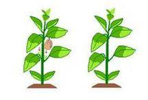 3. Tratamentos das Hortaliças