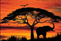 Out of Africa!