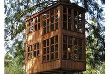 DVC 1 - Tree Dwelling