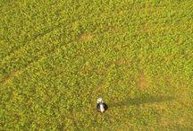 Blackbird Photography / Blackbird Aerial Videos and pictures