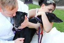Four legged guests / Animals at weddings. I LOVE them!!