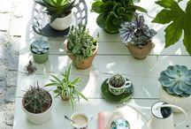 Deco Garden