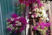 de tuin in 2014 / de tuin zomer 2014
