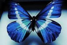JOKO- Motyle