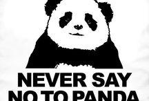 panda reich / Panda bears, pandas, it's me when...