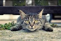 Cats, cats! / by Sitta