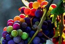 Glass Half Full / Gorgeous vineyards around the world.