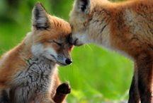 Cute ❤️ / Animals! :) / by halle haynes