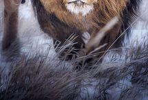 Règne animal/Animal Kingdom