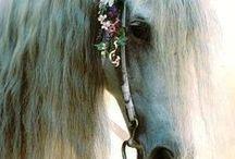 Koně....jsou prostě nádherní