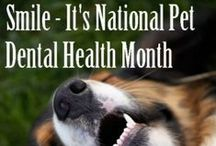 Dental Health Awareness / We celebrate Dental Health Awareness all year by offering 10% off dental cleanings when they are scheduled within 30 days of a doctor's recommendation but February is National Pet Dental Month so we're offering 10% off all dental cleanings for the month!