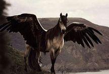 caballos- Cavalli-unicorno