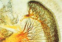 Biological/microscopic art