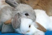 Bunnies / Who hates bunnies?