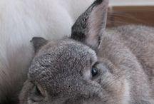 bunnies ahh