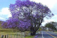las bellezas del uruguay
