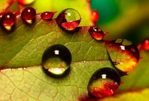 Just a small drop... / by Heidi Katrine Hansen