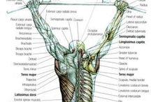 Fumettare: General Anatomy