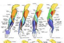 Fumettare: Arms