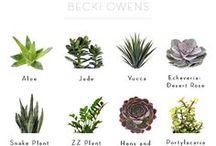 plants & moss